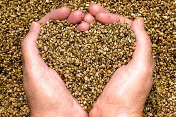 piantare-semi-con-amore