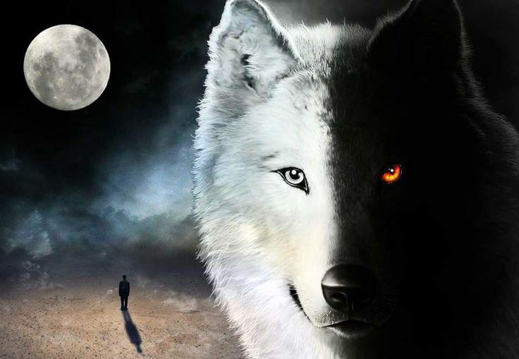 lupo-bianco-e-nero